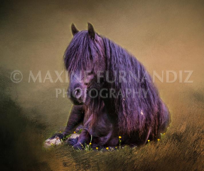 Black horse-Edit-Edit-Edit