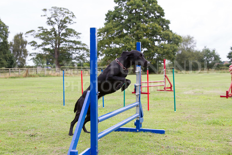 Dawns Agility 14 August 2016-1743