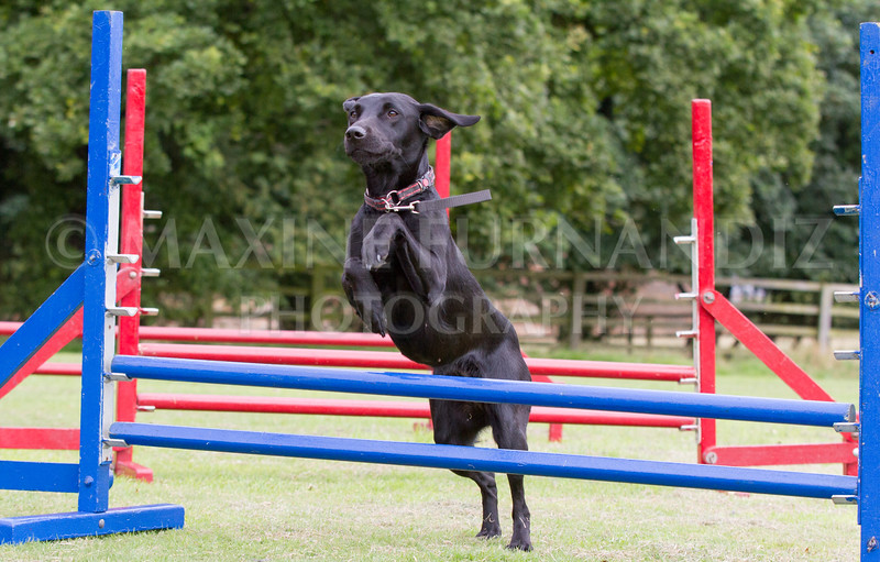 Dawns Agility 14 August 2016-1870
