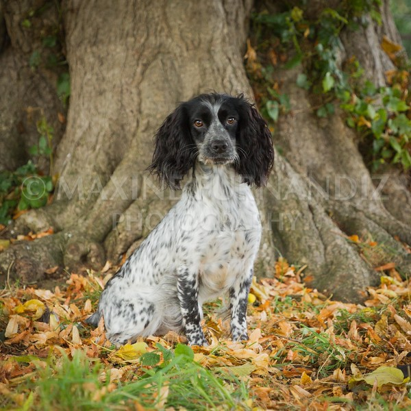 Dogs Autumn-6436