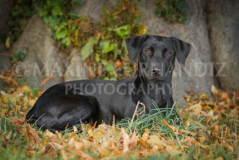 Autumn dogs-6289