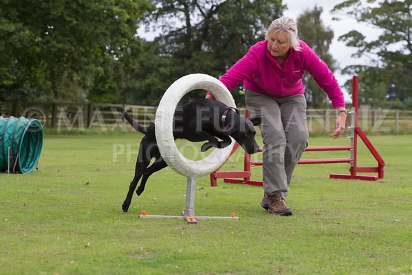 Dawns Agility 14 August 2016-1774