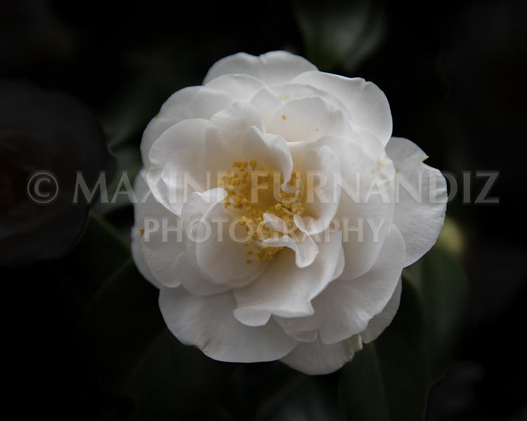 Flowers-1760