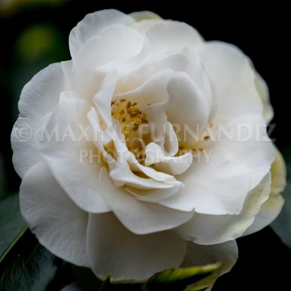 Flowers-1766