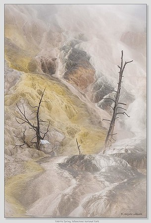 Palette Spring / Yellowstone National Park / Wyoming