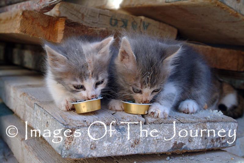 Delphic Kittens