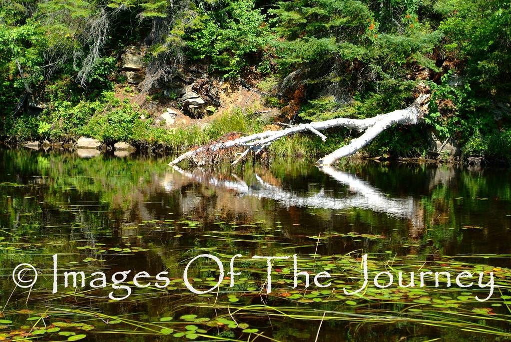 Symmetry  -Algonquin Provincial Park
