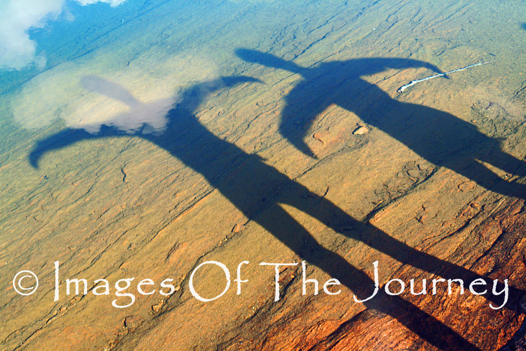 Shadows Taking Flight