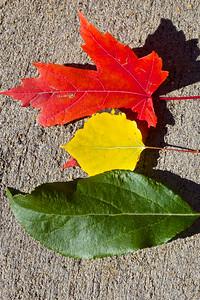 Stoplight Leaves