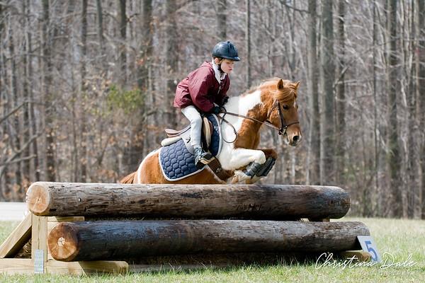 Chestnut & White Pony