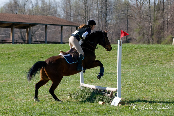 76 Bay Horse
