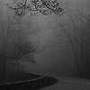 Skyline Drive Fog