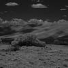 Dappled Dunes