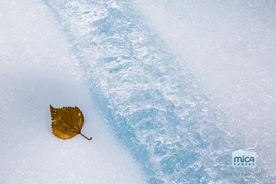 Glacial Leaf