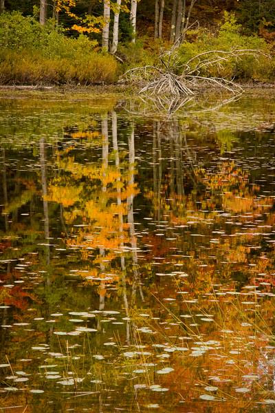 Reflections at Council Lake