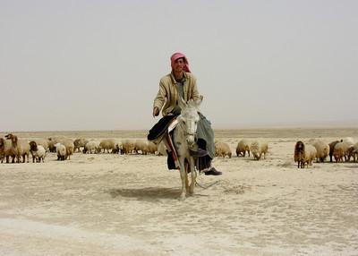 BEDOUIN SHEPHERD - SYRIAN DESERT
