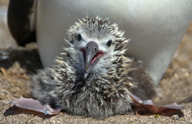 DSC_1826 chick
