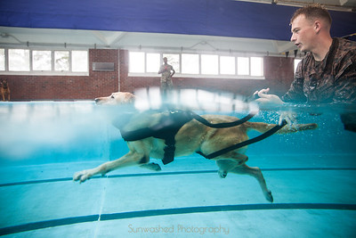Military Working Dogs Swim Qual