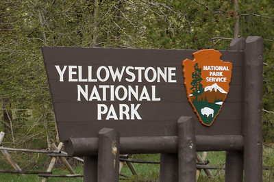 MINIs go to Yellowstone