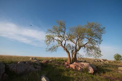 Turkey Vulture Blue Mounds State Park landscape Rock Co MN IMG_9983