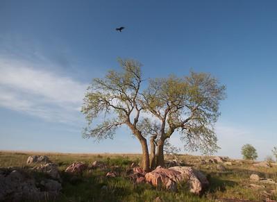 Turkey Vulture Blue Mounds State Park landscape Rock Co MN IMG_9981