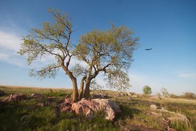 Turkey Vulture Blue Mounds State Park landscape Rock Co MN IMG_9972