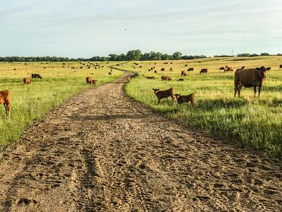 Felton Prairie Clay County MN  IMG_4480