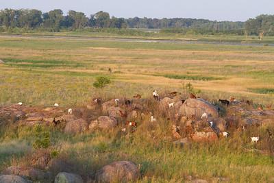 Big Stone National Wildlife Refuge NWR Auto Tour Minnesota River Valley trip July 23-24 2019 IMG_0010