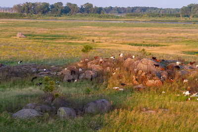 Big Stone National Wildlife Refuge NWR Auto Tour Minnesota River Valley trip July 23-24 2019 IMG_0018
