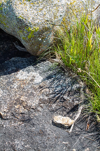 snake skin shed under rock Lac Qui Parle WMA Lac Qui Parle County MN Minnesota River Valley trip July 23-24 2019 IMG_8667