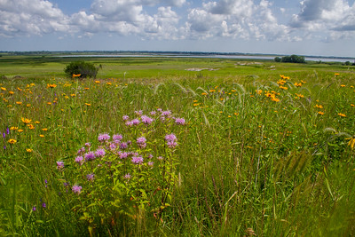 Lac Qui Parle WMA Lac Qui Parle County MN Minnesota River Valley trip July 23-24 2019 IMG_0310