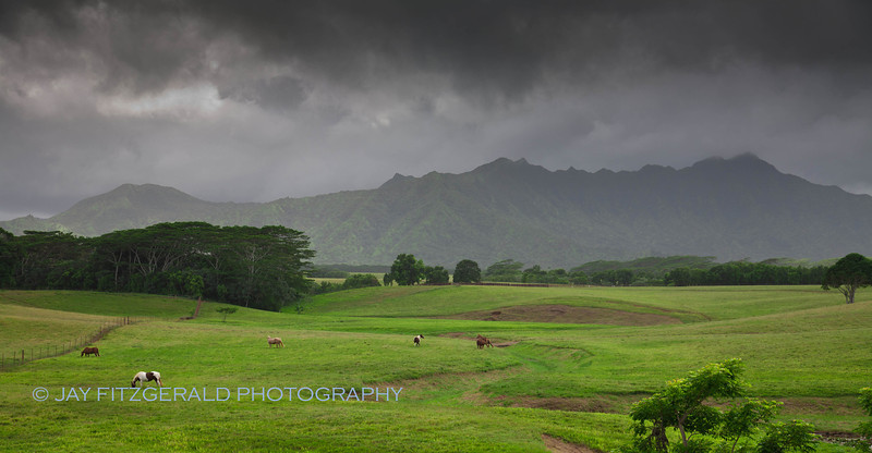 Pastoral beauty on the way to Hanalei, Kauai