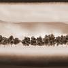 Altamons Trees ~ ArtRage