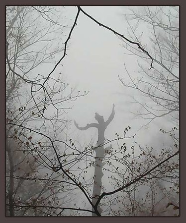 TreeDancer