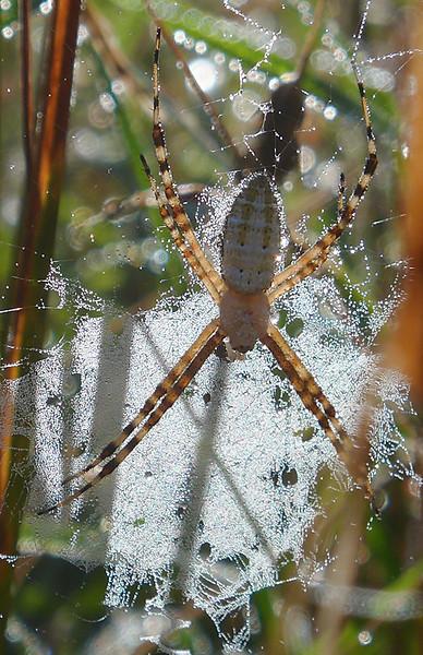 September Webs 3