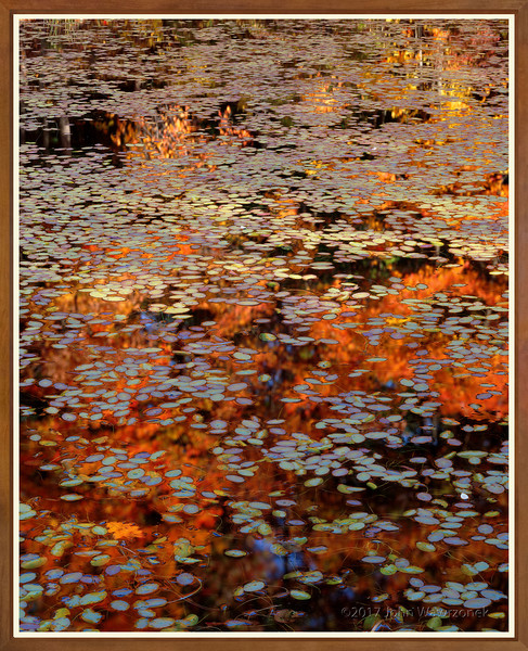 WATER-SHIELDS. WALDEN