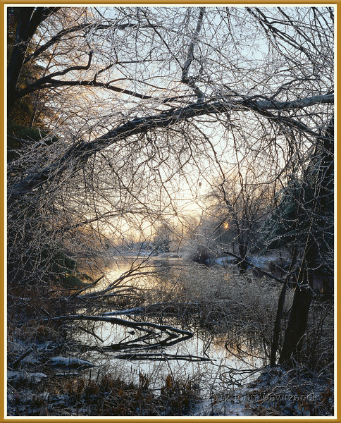 Ice Storm At Sunrise