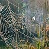 Three Webs