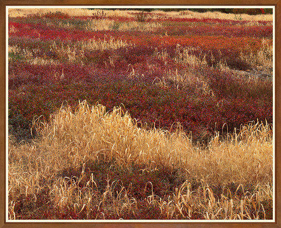 GRASSES AND BLUEBERRIES