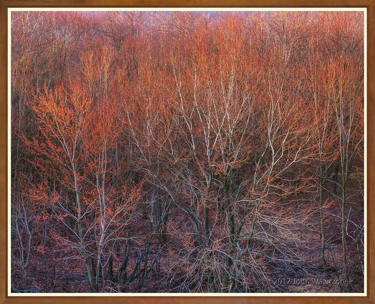 SPRING TREES II