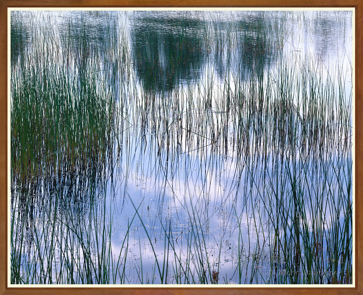 Lily Pond With Reeds & Cloud Reflections