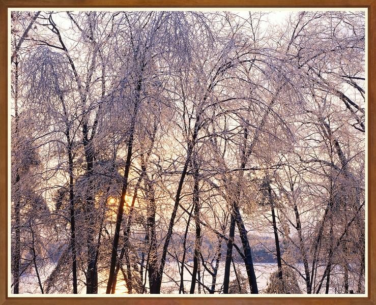 Ice Storm At Sunset, Walden Pond