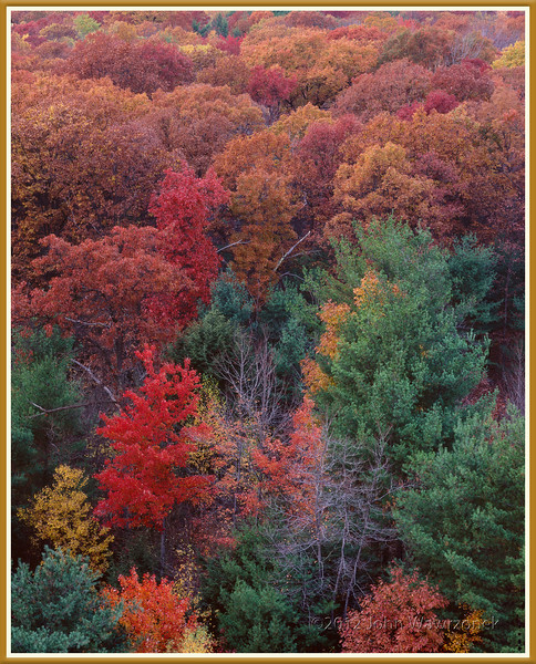 Red, Brown Trees & Evergreens