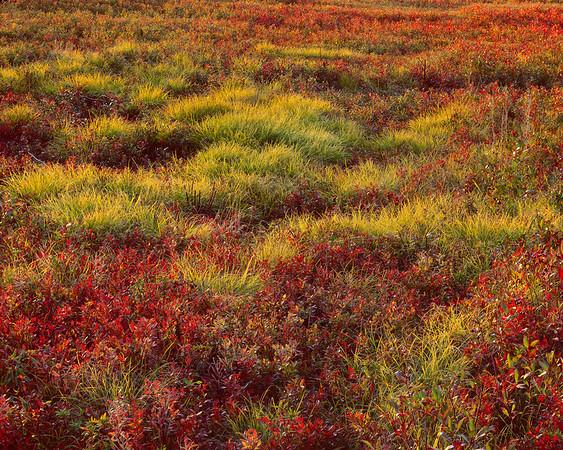 Blueberries & Grasses I