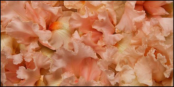 Iris Sea 4938 2529 2217-2235 1012Iris On Iris FR f8 F1 f HOME 2TO1