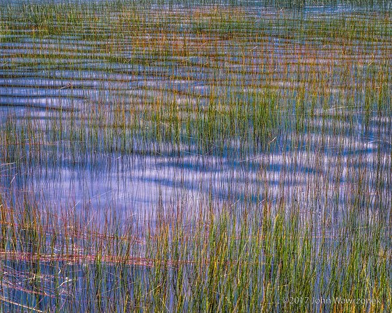 Green Reeds, Blue and White Waves