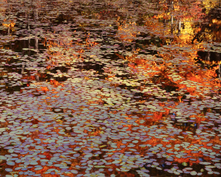 Lily Pond with Reflections Pond