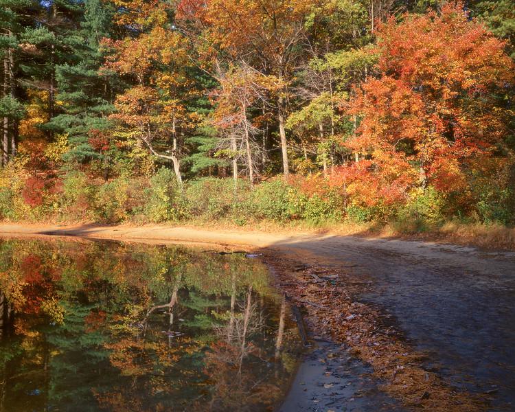 Path Along Thoreau's Cove II