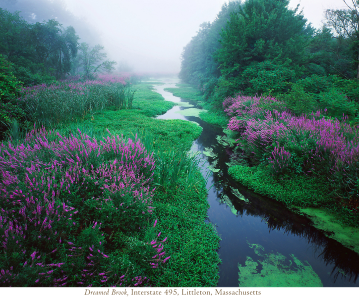 Dreamed Brook