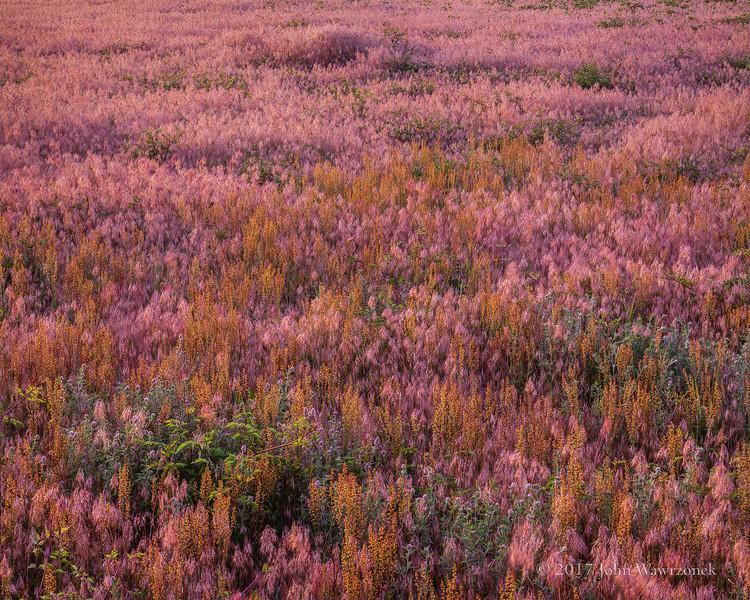 Textures in Grass II